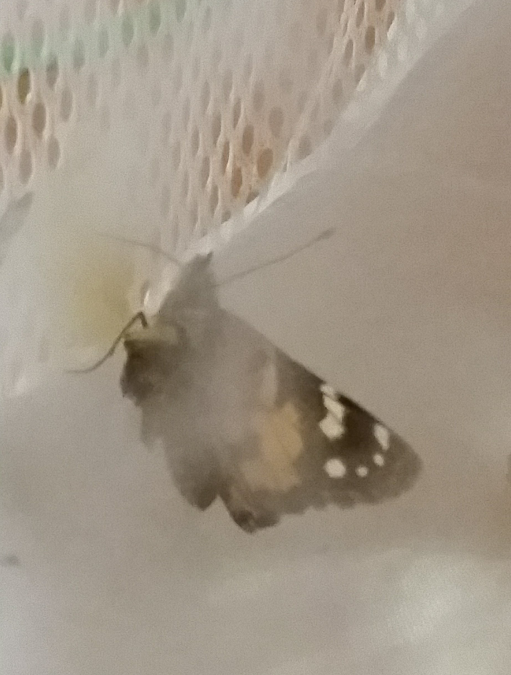 This Butterfly Only Has One Wing